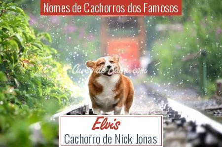 Nomes de Cachorros dos Famosos - Elvis